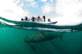 Riesenhaie vor der Isle of Coll